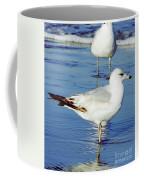 Gull - Beach -reflection Coffee Mug