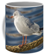 Gull On A Rope Coffee Mug