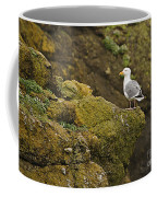 Gull On Cliff Edge Coffee Mug