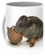 Hamster Eating A Walnut  Coffee Mug