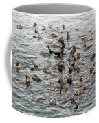 Happy Sea Lions In Santa Cruz Coffee Mug