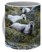 Harbor Seal Colony At Loch Dunvegan Coffee Mug