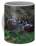 Harlequin Ducks  Coffee Mug