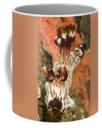 Harlequin Shrimp Hymenocera Elegans Coffee Mug