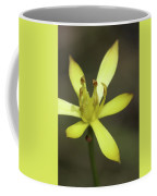 Harper's Beauty #2 Coffee Mug