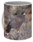 Harris Hawk At Rest Coffee Mug