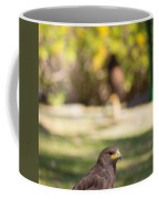 Harris Hawk Looking At Infinity Coffee Mug