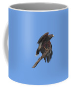 Harris Hawk - Transparent Coffee Mug