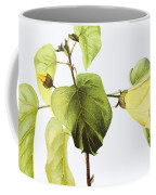 Hau Plant Art Coffee Mug