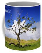 Hawaii Koa Tree Coffee Mug