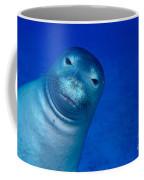 Hawaiian Monk Seal Coffee Mug