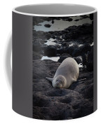 Hawaiian Monk Seal Coffee Mug