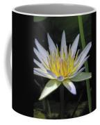 Hawaiian Water Lily 05 - Kauai, Hawaii Coffee Mug
