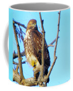 Hawk In A Tree Coffee Mug