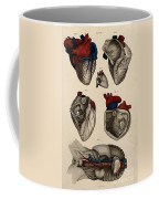 Heart, Anatomical Illustration, 1822 Coffee Mug
