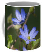 Hepaticas Coffee Mug