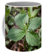 Herb Paris Coffee Mug