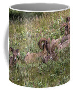 Herd Of Bighorn Sheep Coffee Mug