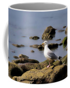 Herring Gull At Charmouth Coffee Mug