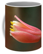 Hesperaloe Parviflora - False Agave Coffee Mug