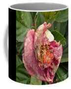 Hibiscus Bloom Closed In The Rain   End View      May           Indiana      Coffee Mug