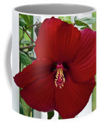 Hibiscus By Picket Fence Coffee Mug