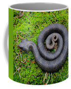 Hognose Spiral Coffee Mug