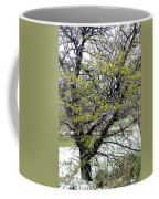 Honey Locust Tree On A Spring Snow Day Coffee Mug