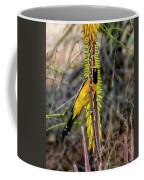 Hooded Oriole V1834 Coffee Mug
