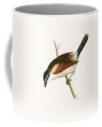 Hooded Shrike Coffee Mug