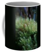 Hoomalumalu Kuhiwa Coffee Mug