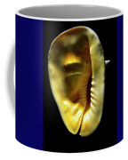 Horned Helmet Shell Cassis Cornuta Coffee Mug