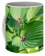 Hosta Bed Coffee Mug