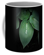 Hostas After The Rain Coffee Mug