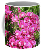 Hot Pink Sweet William Flowers In A Garden Blooming Coffee Mug