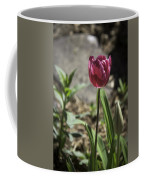 Hot Pink Tulip Coffee Mug