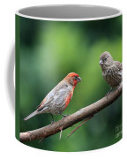 House Finch Courtship Coffee Mug