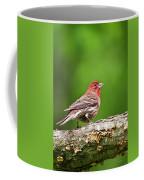 House Finch Perched Coffee Mug