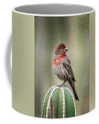 House Finch Perched On Cactus  Coffee Mug