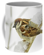 House Sparrow Coffee Mug