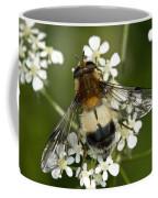 Hoverfly Leucozona Lucorum Coffee Mug