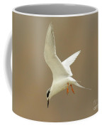 Hovering Tern Coffee Mug