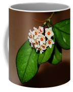 Hoya Carnosa Coffee Mug