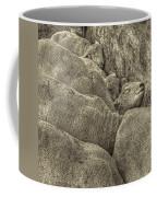 Huddled Yearling Rams Coffee Mug