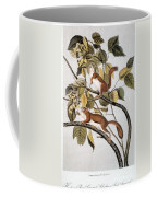 Hudsons Bay Squirrel Coffee Mug