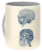 Human Brain - Central Nervous System - Vintage Anatomy Print Coffee Mug
