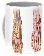 Human Foot Anatomy Showing Skin, Veins Coffee Mug
