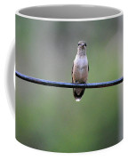 Hummingbird At Sunrise I See You Cameraman 02 Coffee Mug