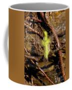 Hummingbird Bath Coffee Mug