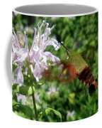 Hummingbird Clear-wing Moth At Monarda Coffee Mug